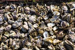 Empty oyster shells in wire baskets Morocco Royalty Free Stock Images