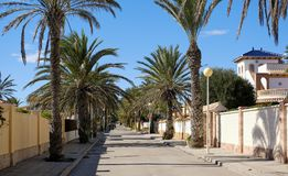 Empty palm-lined street of Cabo Roig. Costa Blanca Royalty Free Stock Photo