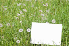 Empty paper card in grass Royalty Free Stock Image