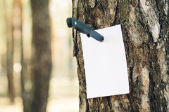 Empty paper stuck into a tree with a knife Royalty Free Stock Images