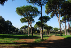 Empty park. Having a walk in an empty park in Rome Stock Images