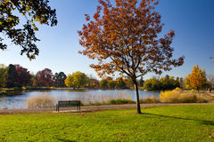 Empty Park Bench by Lake in Fall Stock Images