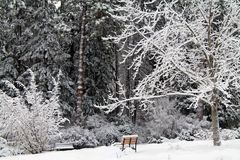 Empty Park Bench in a Snowy Forest Stock Photo