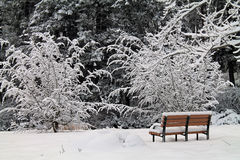 Empty Park Bench in a Snowy Forest Stock Photos