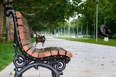 Park bench in the morning, close take stock photo