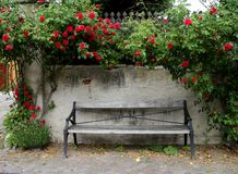 Weathered park bench stands in front of a stone wall with climbing red roses stock images
