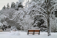 Empty Park Bench in a Winter Forest Stock Photos