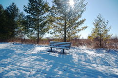 Empty park bench in winter on a snow covered trail with green trees blue sky and sun Stock Image