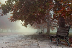 Empty park benches on a foggy autumn's morning. Park is empty as a chill autumn morning is breaking through royalty free stock photos