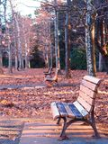 Empty park benches in winter. Lit by the late afternoon sun and surrounded by piles of fallen leaves Stock Photos