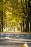 Empty park with fallen autumn leaves Royalty Free Stock Images