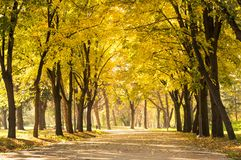 Empty park with fallen autumn leaves Royalty Free Stock Image
