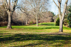 Empty park grass field and trees casting shadows. Royalty Free Stock Photography
