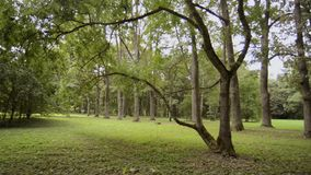 Pan summer park. Empty park by summer, pan camera movement stock video footage
