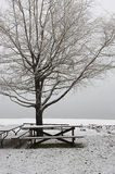 Empty park in winter. Stock Image