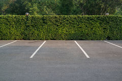 Empty parking lot with foliage wall in the background. Empty asphalt car park with green foliage wall and trees in the background Royalty Free Stock Photography