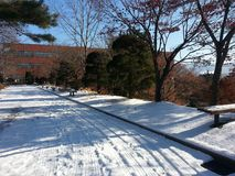 Empty path or alleyway or walkway in wooden avenue with two rows of trees sides with snow on both sides in cold and sunny winter d. Ay royalty free stock photos