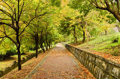 Empty path in Autumn Stock Photo