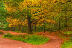 Empty path in autumn forest Royalty Free Stock Photo