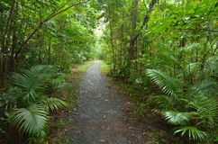 Empty path in Daintree National Park Queensland, Australia. Empty path in Daintree National Park near Cape Tribulation in the tropical north of Queensland royalty free stock photos