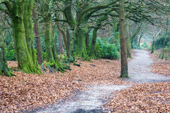Empty Path through forrest Royalty Free Stock Images