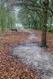 Empty Path through forrest Royalty Free Stock Photography