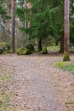 Pathway in forest. Empty pathway in forest at day nature background Stock Photos