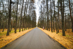 Empty paved road. City Park, late autumn. Stock Photography