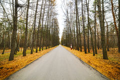 Empty paved road. City Park, late autumn. Stock Photos