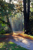 Empty paved walkway through autumn forest Stock Images
