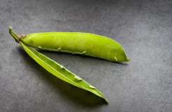 Empty pea pod. Stock Photo