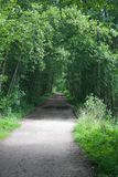 Empty pedestrian path in the park royalty free stock image