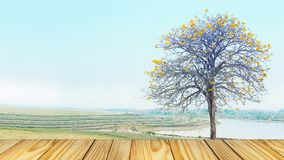 Empty perspective old wooden over on background yellow tree Royalty Free Stock Image
