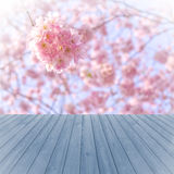 Empty perspective red wood over blurred, blooming trees with bokeh background, for product display montage Stock Photo