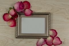Empty photo frame with rose flower and petals. Close-up of empty photo frame with rose flower and petals stock photos