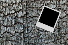 Empty photo frame on wood background Stock Image