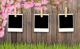 Empty photo frames against wooden background Stock Image