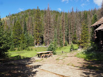 Empty picnic table in Rocky Mountain Park Stock Photography