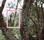 Empty picture or photo frame. Empty picture or photo frame on tree Stock Images
