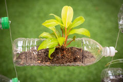 Empty plastic bottle use as a container for growing plant, recyc Royalty Free Stock Photography