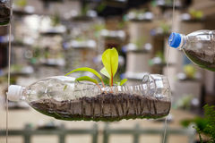 Empty plastic bottles use as a container for growing plant, recy Stock Photos