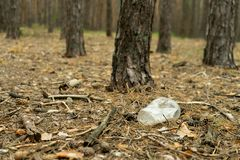 Empty plastic cup in the form of garbage in the forest thrown by man. The concept of environmental pollution by human life. Products stock photo