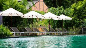 Empty poolside loungers with umbrellas. And Beautiful tropical beach front hotel resort with swimming pool with green nature background Royalty Free Stock Image