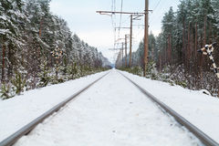 Empty railroad in winter forest Royalty Free Stock Photography