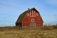 Empty Red Hip Roof Barn. An old red barn stands unused surrounded by weeds, long grass, and a fence Royalty Free Stock Photos