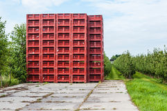 Empty red picking crates stacked near an orchard Stock Photo