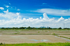 Empty rice field Stock Photography