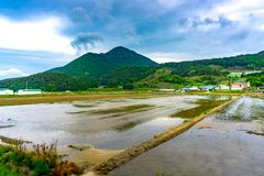 Empty rice field prepared for plant rices when agriculture season royalty free stock image