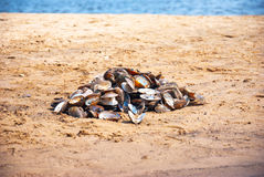 Empty river shells on the sand in the summer Stock Photos