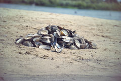 Empty river shells on the sand in the summer Stock Images